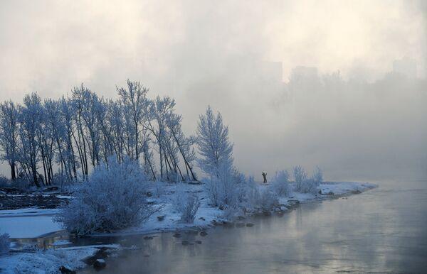 Деревья в инее на острове Татышева на реке Енисей в Красноярске