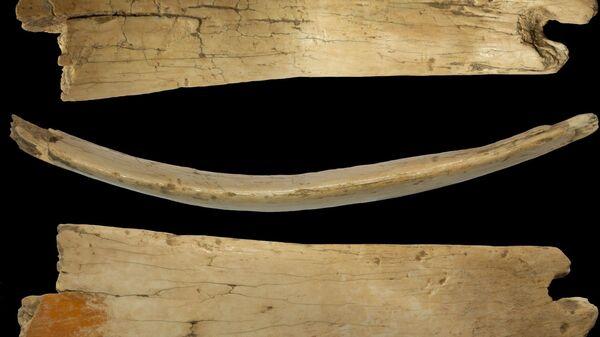 Наиболее крупный фрагмент диадемы из бивня мамонта в трех проекциях