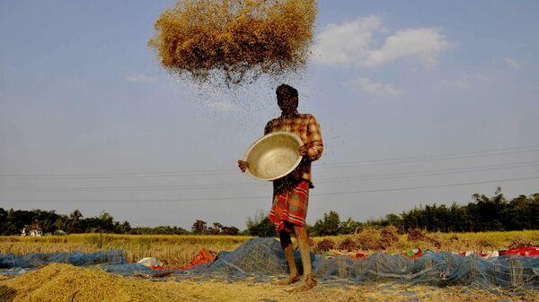 Фермер веет рис на окраине города Агартала в Индии