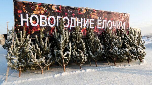 Елки, предназначенные для продажи на новогодние праздники