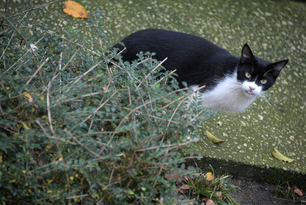 Кошка Геленджикская, санаторий «Голубая волна»