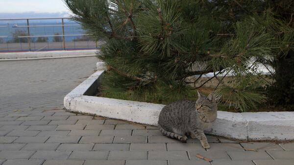 Кошка Кабардинская, санаторий «Надежда SPA&Морской бриз»