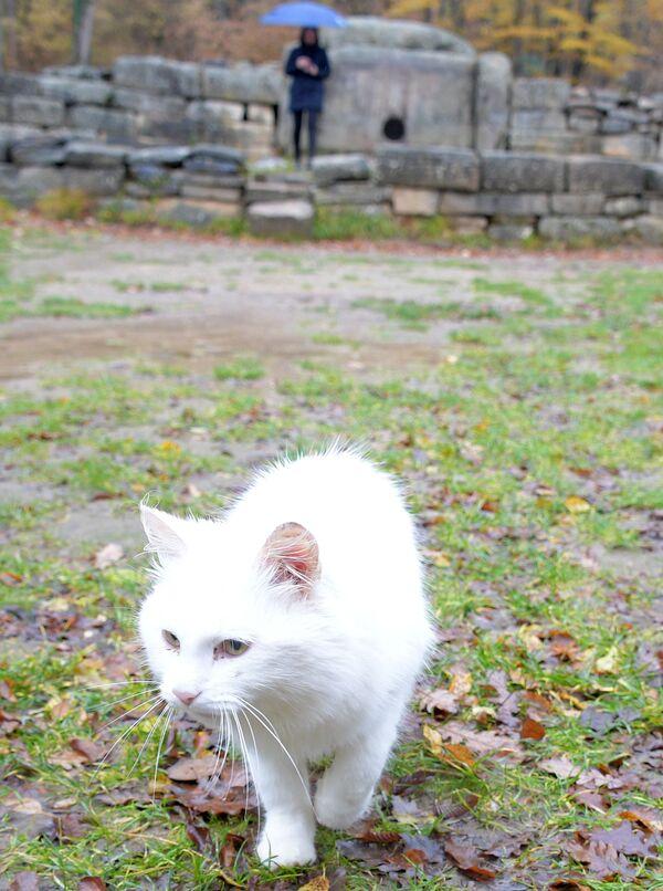 Кошка долины реки Жане. «Сканирует» энергетику тех, кто пришел к загадочным дольменам. Поселок Возрождение близ Геленджика