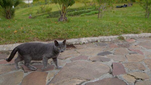 Кошка санаторно-курортная, вальяжная