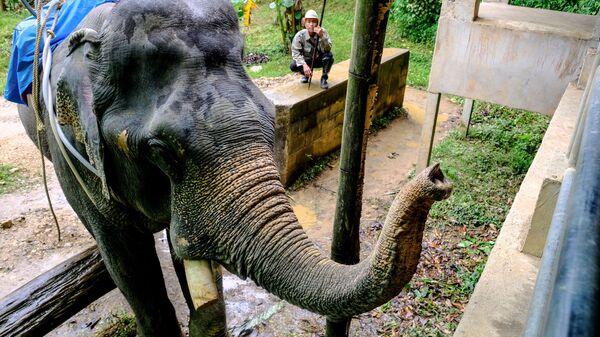 Слон в окрестностях национального парка Као Сок в провинции Сураттани