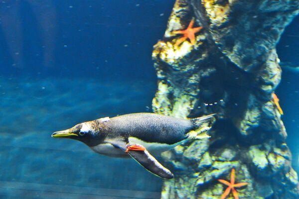 Пингвин под водой в пингвинарии Лоро Парка (Loro Parque) на Тенерифе