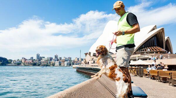Патрульная собака Сиднейского оперного театра