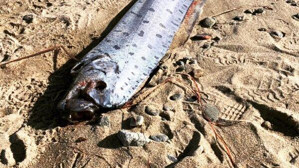 Глубоководная рыба на берегу в Японии