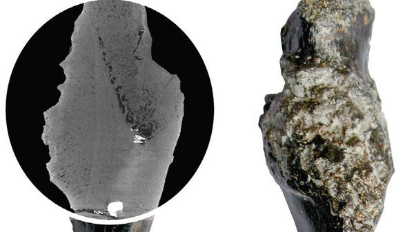Кость черепахи, страдавшей от рака 240 миллионов лет назад
