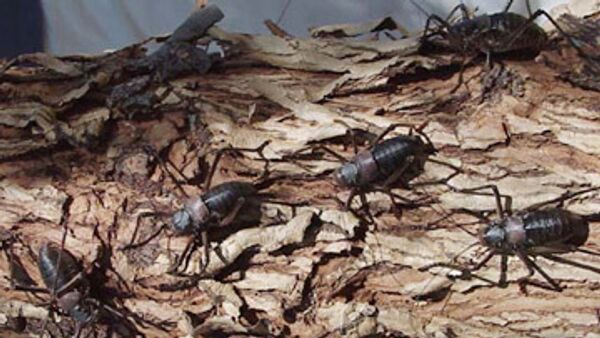 Сколько насекомых приходится на одного человека?