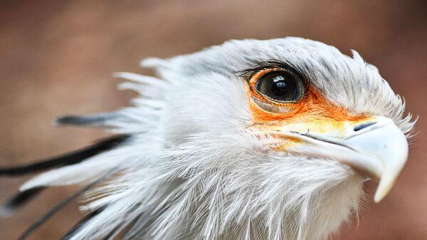 Птица-секретарь в Московском зоопарке