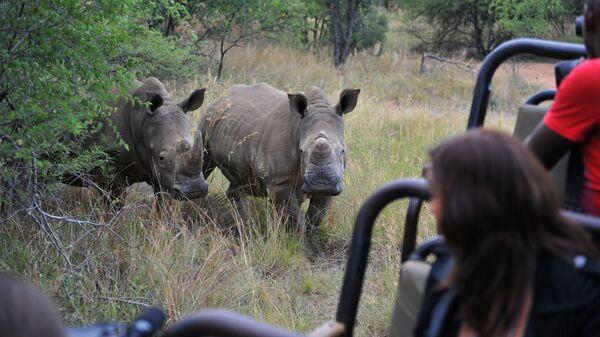 Носороги в Лимпопо, Южная Африка