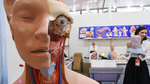 Анатомическая модель человека с внутренними органами на VI Московском международном салоне образования