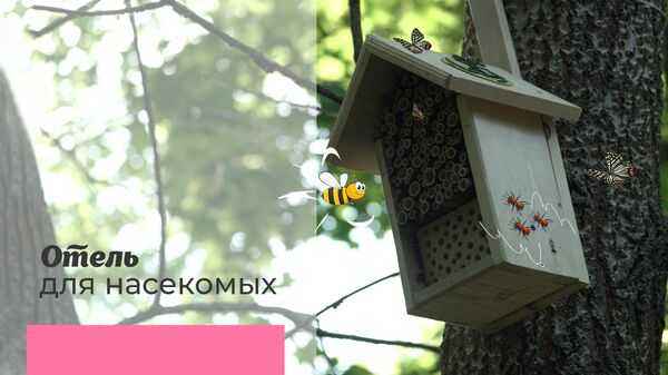 Отель для насекомых: улучшаем биологическое разнообразие города