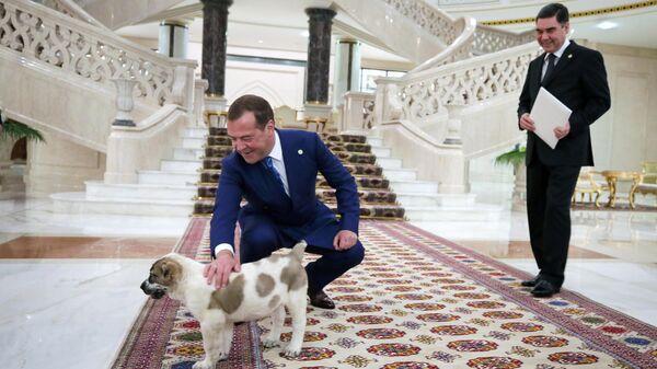 Президент Туркмении Гурбангулы Бердымухамедов подарил премьер-министру РФ Дмитрию Медведеву щенка алабая. 30 мая 2019