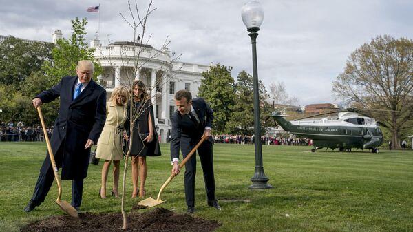 Дуб дал дуба. Дерево дружбы Макрона не прижилось в США