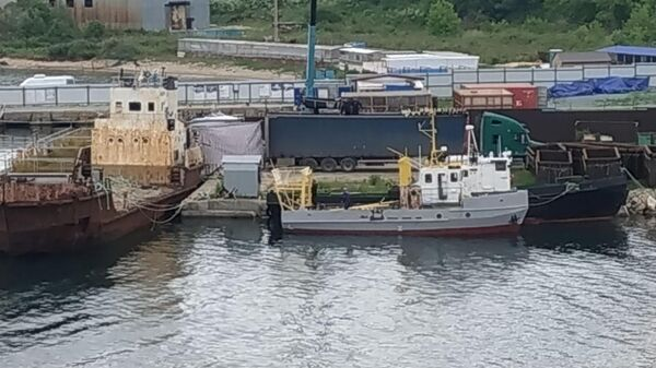 Косаток из китовой тюрьмы во Владивостоке начали перегружать в машины для выпуска. 20 июня 2019