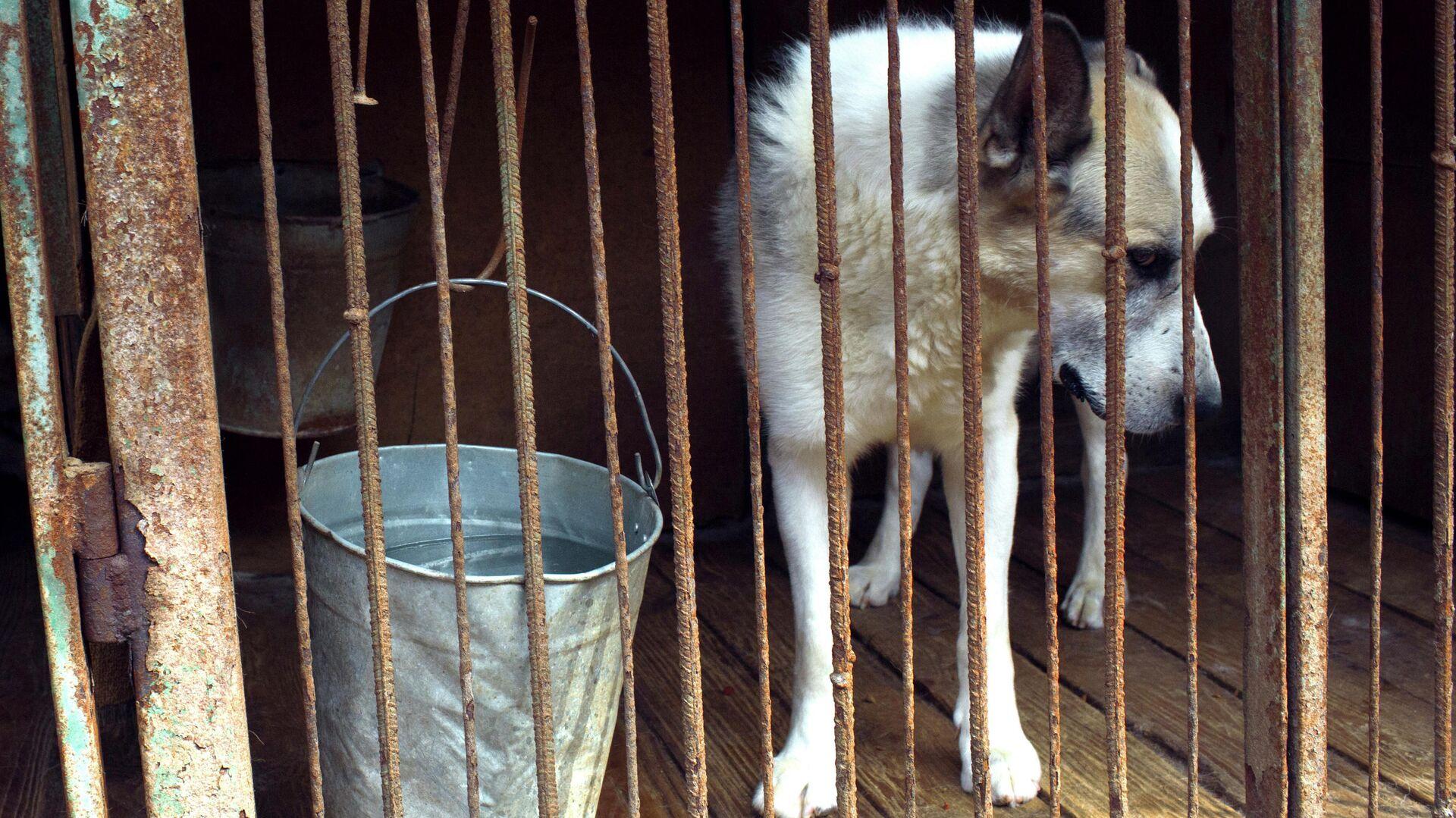 Собака в приюте для бездомных животных в Москве - РИА Новости, 1920, 06.11.2020