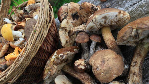 Сбор грибов в Подмосковье