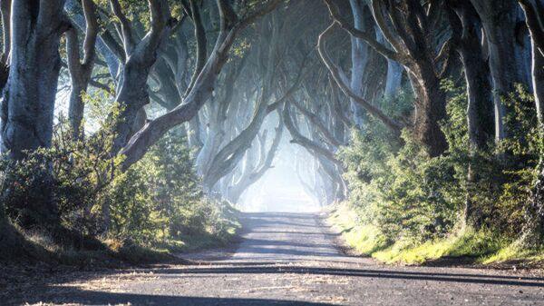 Буковая аллея The Dark Hedges, где снимали Игру престолов. Белфаст, Северная Ирландия.