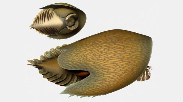 Так художник представил себе доисторического ктулху, Cambroraster falcatus