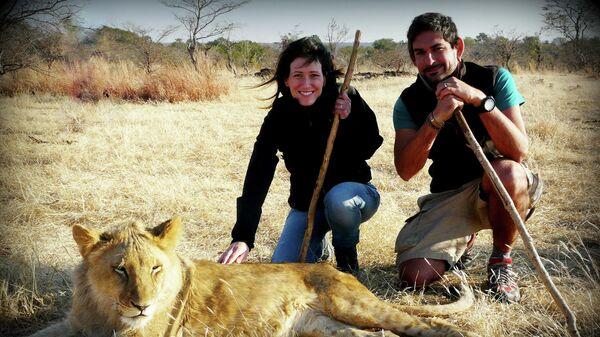 Молодые люди гуляют со львом в Зимбабве