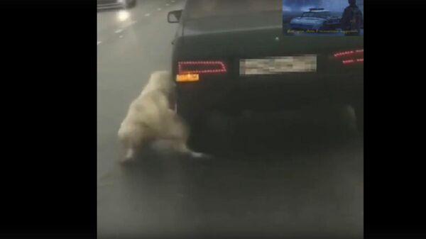 В Москве мужчина привязал собаку к едущей машине