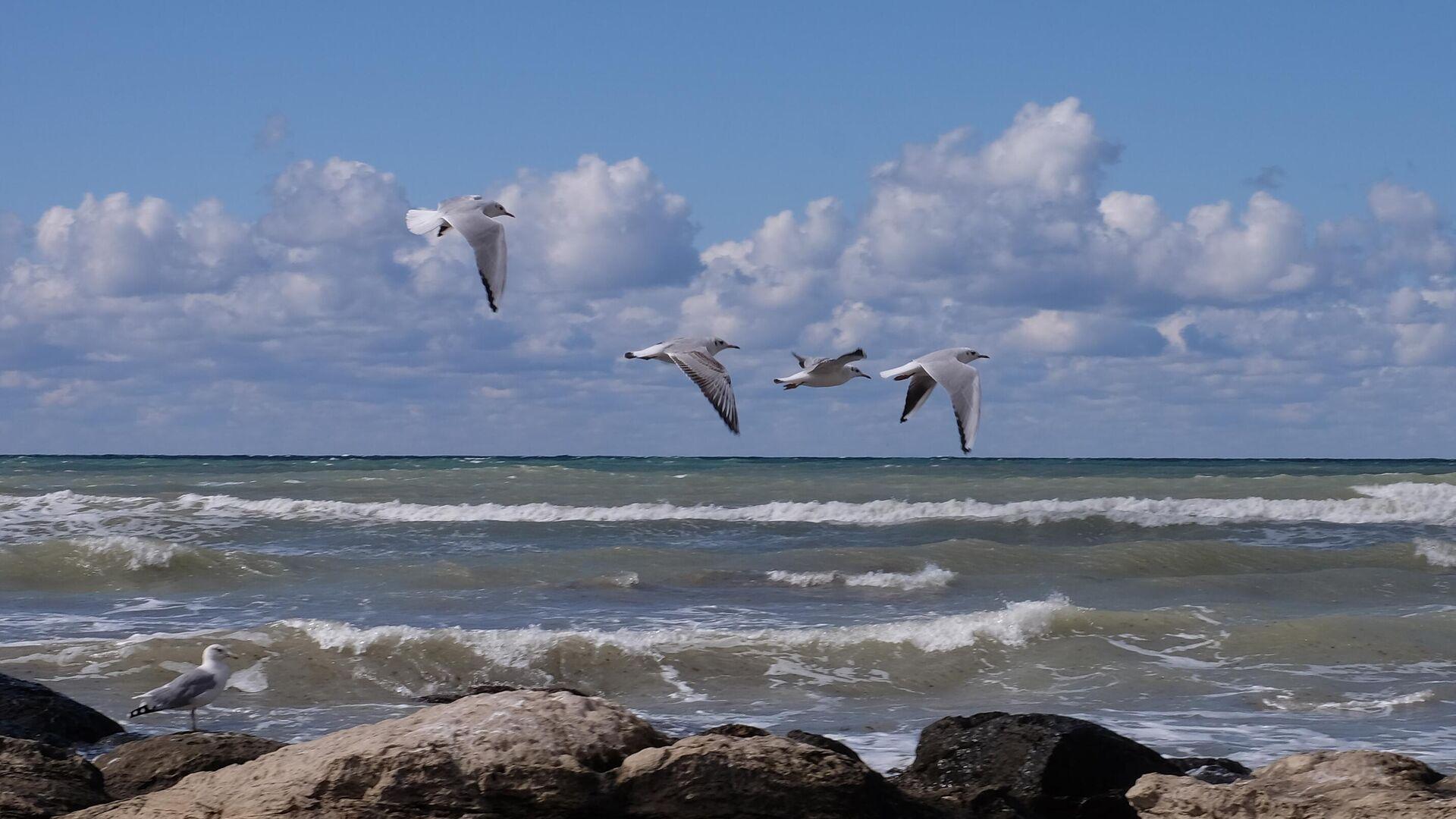 Серебристые чайки на Каспийском море в Актау - РИА Новости, 1920, 24.09.2021