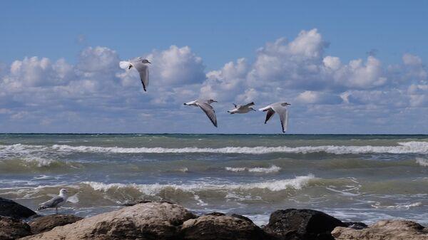 Серебристые чайки на Каспийском море в Актау