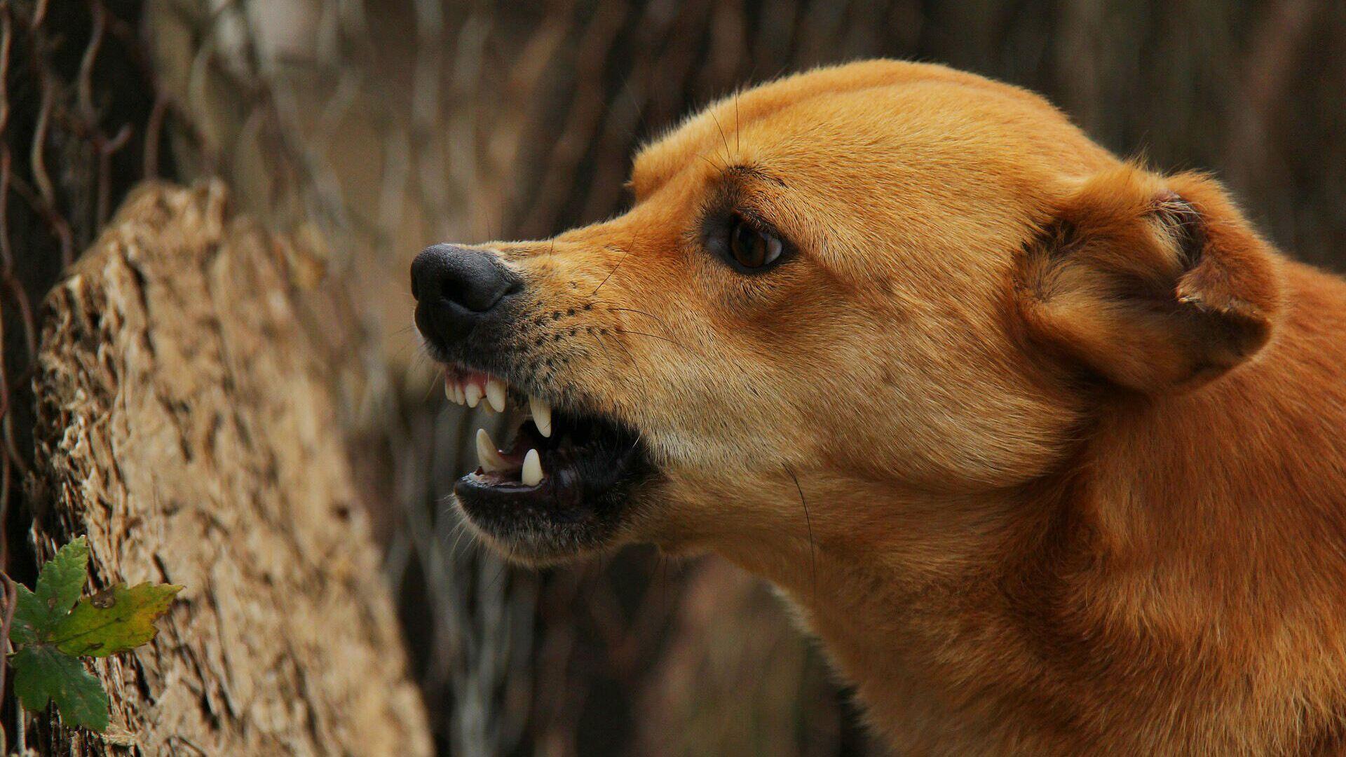Злая собака - РИА Новости, 1920, 07.05.2021