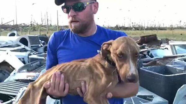 Выжить после урагана: годовалого щенка нашли под завалами