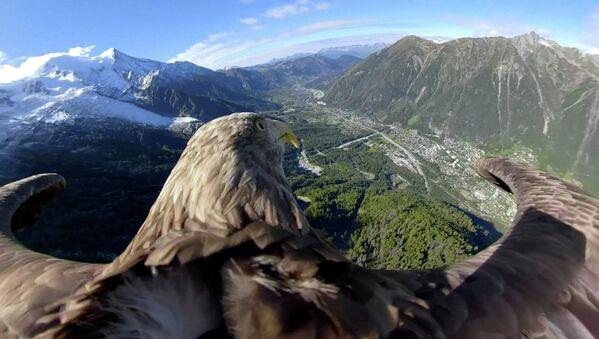 Орел летит над ледниками и горами в Шамони