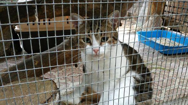 Кот, проходивший в качестве вещественного доказательства по делу о доставке наркотиков в ИК-6 в Тульской области