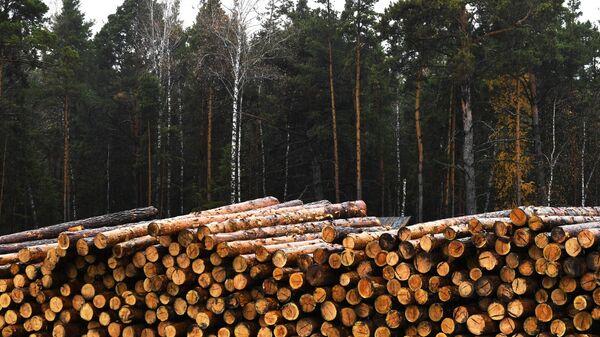 Склад круглого леса лесного хозяйства Кирзинское в Ордынском районе Новосибирской области