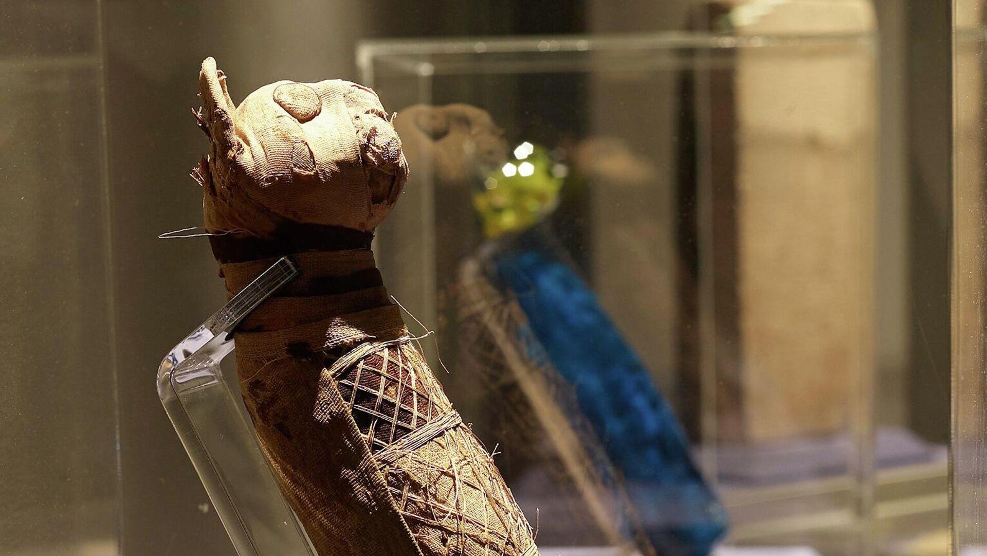 Мумия кошки в Музее изобразительных искусств в Ренне, Франция - РИА Новости, 1920, 28.10.2019