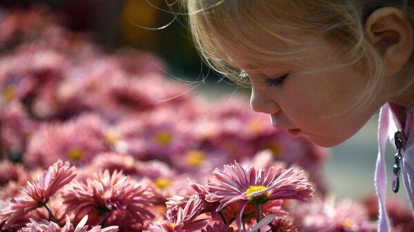 Девочка любуется хризантемами в Никитском ботаническом саду на 65-й выставке хризантем Осенний блюз