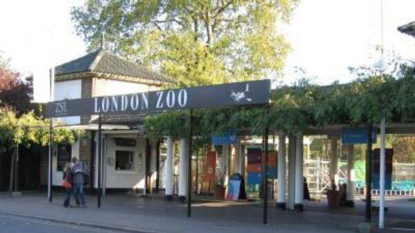 Лондонский зоопарк предлагает дарить близким опекунство над животными