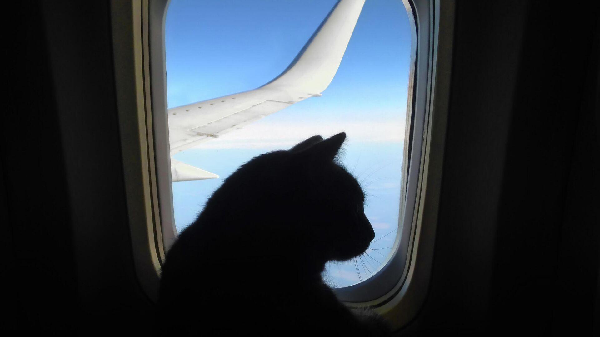 Кошка в самолете - РИА Новости, 1920, 22.09.2021