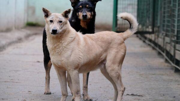Собаки гуляют на территории приюта для бездомных животных Зоорассвет в Кусково