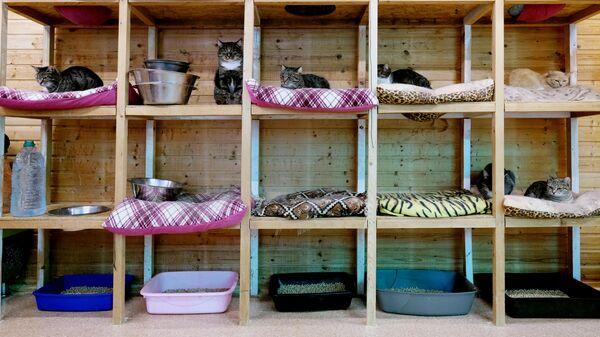 Кошки в вольере на территории приюта для бездомных животных Зоорассвет в Кусково