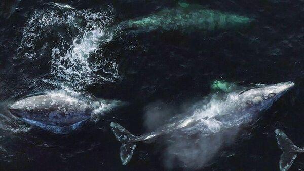 Экспедиция по изучению серых китов на Сахалине