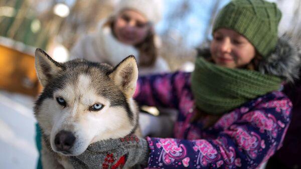 Дети на территории парка Сокольники во время общения с собаками породы хаски в рамках реабилитационной и образовательной программы По пути с хаски, организованной фондом Клуб Приключение и ГБУ Лаборатория путешествий