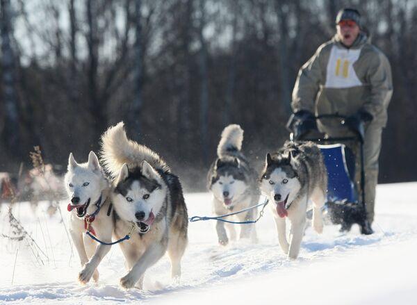 Гонка на собачьих упряжках пройдет на Камчатке