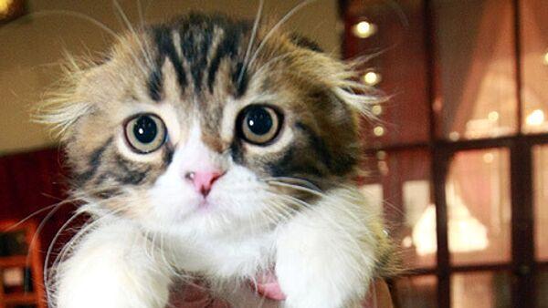 Кошка. Архив