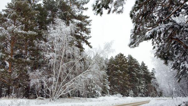Главпромстрой обжаловала штрафы за вырубку деревьев в Утрише