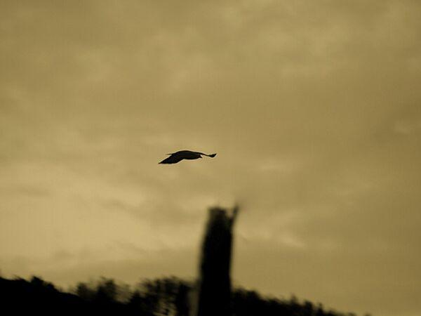 В 2008 году на Кипре нелегально поймали более 1,1 млн птиц
