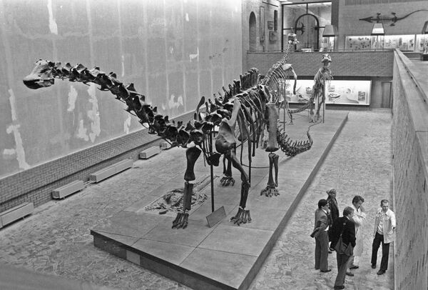 Динозавры были гигантами благодаря энергоэффективности - ученый