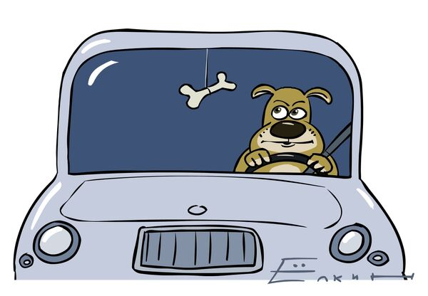 В наше время любая собака умеет водить