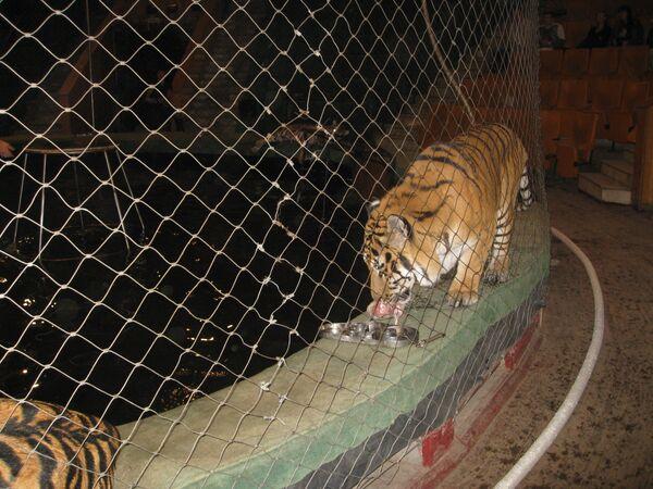 Ветеринары в пятницу назовут причины смерти девяти хищников в Якутии