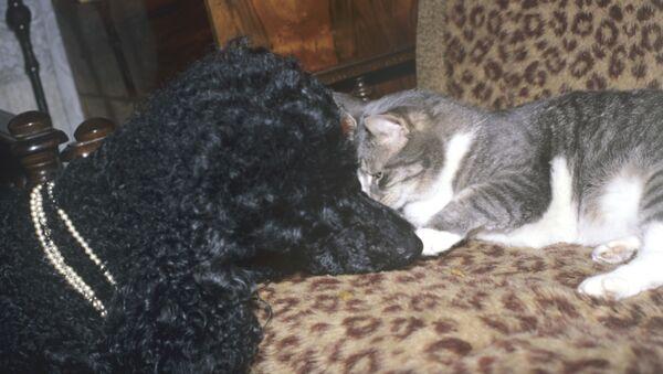 Кошка и собака. Архив